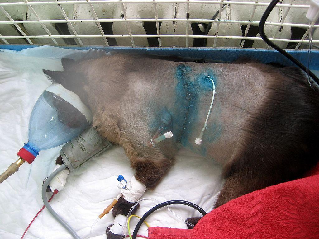 какое обезболивающее можно дать собаке после стерилизации Москве сейчас